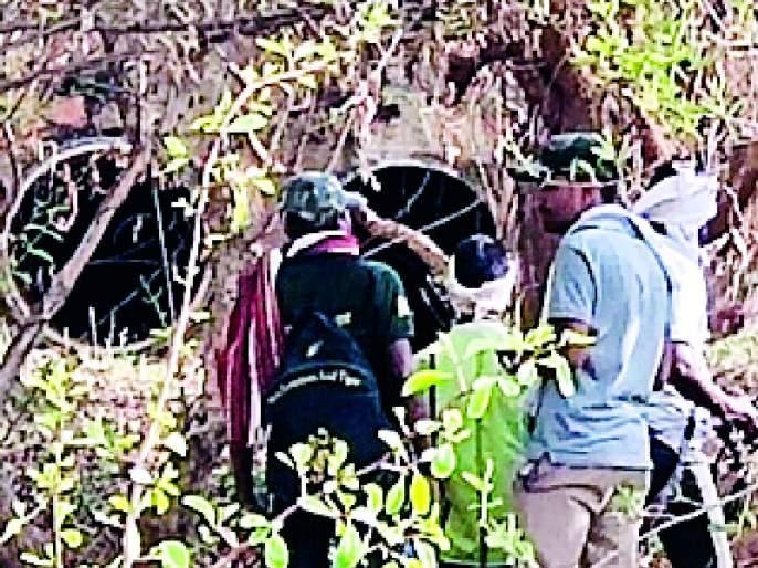 BAGNTHADA BANGLADESH | बावनथडी प्रकल्पाच्या कालव्यात वाघाचे बस्तान
