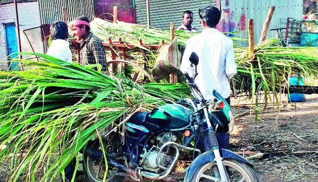 Farmer's preference for sugarcane bagasse | उसाच्या बांडीला शेतकऱ्यांची पसंती