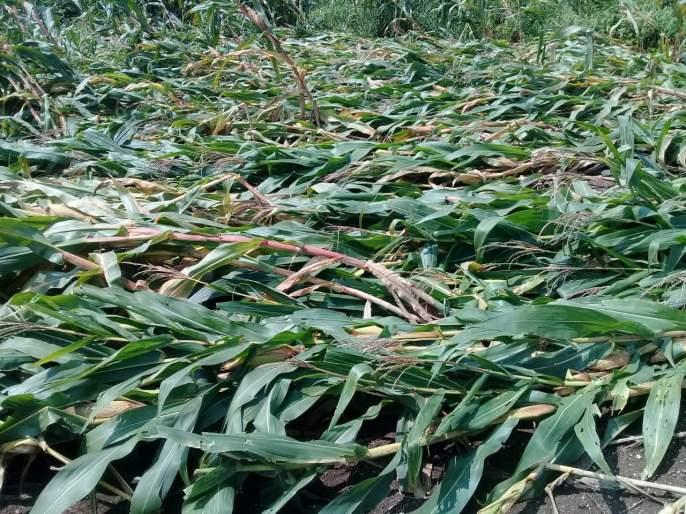 Farmers worry about rabi season capital   शेतकाऱ्यांना रब्बी हंगामाच्या भांडवलाची चिंता