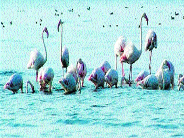 Nandur Madheshwar got Ramsar status | नांदूरमधमेश्वरला मिळाला रामसर दर्जा