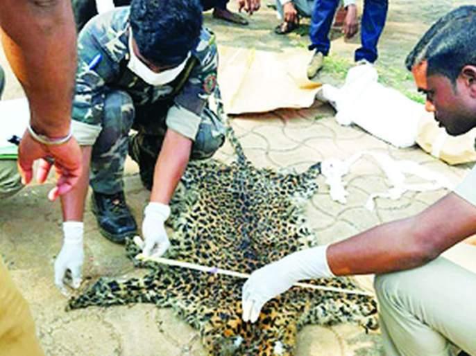 The leopard was electrocuted | त्या बिबट्याची करंट लावून केली शिकार