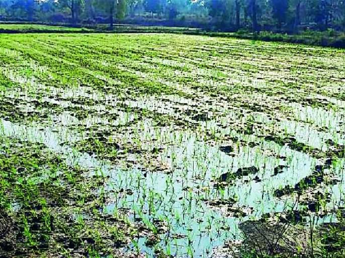 Scatter the hail crops | गारपिटीचा पिकांना फटका