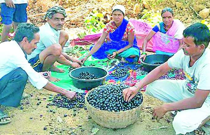 Demand for Kanchi purple in Nagpur | कोरचीच्या जांभळाला नागपुरात मागणी