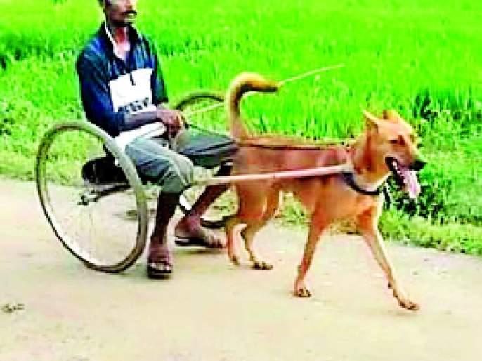 A dog cart made by farmers | शेतकऱ्यांनी बनविली कुत्र्याची गाडी