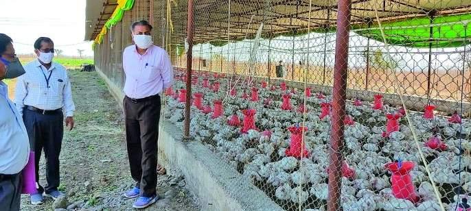 32 thousand hens will be destroyed today | 32 हजार कोंबड्या आज करणार नष्ट