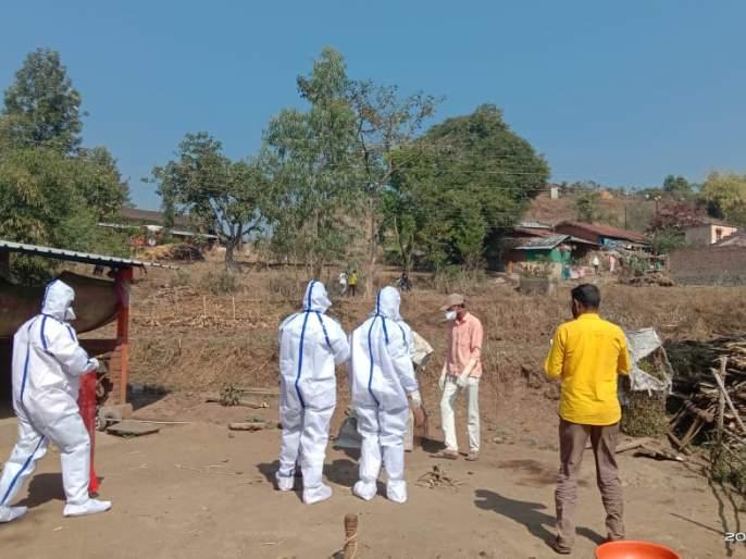 Influenza of bird flu in Baglan | बागलाणमध्ये बर्ड फ्लूचा शिरकाव