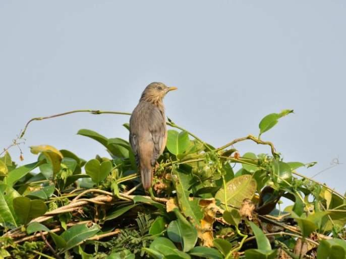 A school for birds at Gorewada Lake in Nagpur | नागपुरात गोरेवाडा तलावावर भरली पक्ष्यांची शाळा