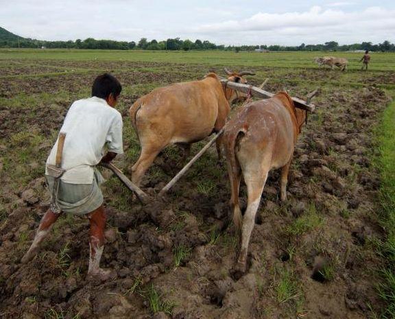 heavy raining in next four days but the agriculture department warns the farmers | उद्यापासून पुढील चार दिवस राज्यात वादळी पाऊस, कृषी विभागाचा शेतकऱ्यांना इशारा