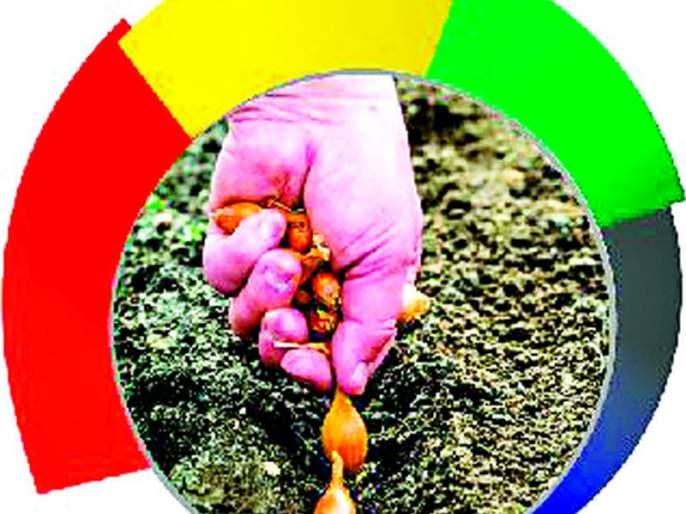 Rising seed prices will offset onion losses!   बियाण्याच्या दरात वाढ कांदा नुकसान भरून काढणार!
