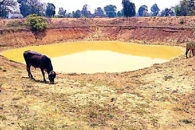 Farmers' Belongings | शेततळ्यांचा पशूंना आधार