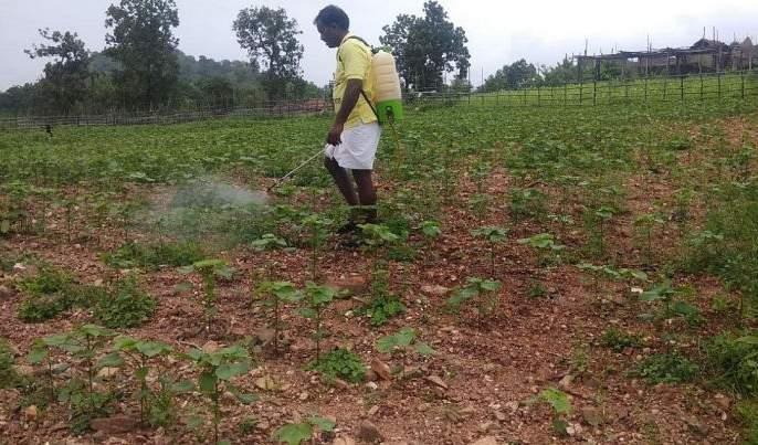 Farmers! Be careful when spraying; Appeal of the Department of Agriculture | शेतकऱ्यांनो! फवारणी करताना घ्या काळजी;कृषी विभागाचे आवाहन