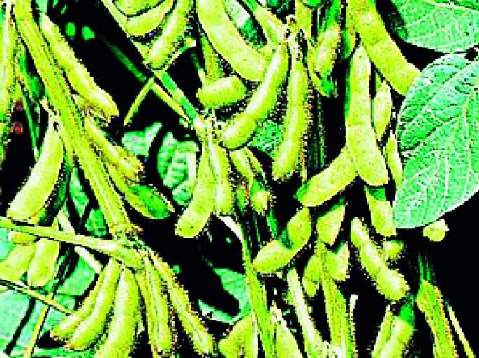 Return rain soybean, cotton roots | परतीचा पाऊस सोयाबीन, कपाशीच्या मुळावर
