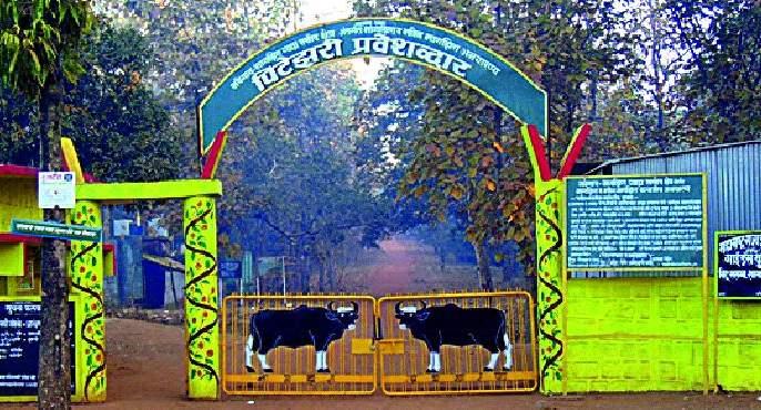 Navegaon-Nagzira tiger project to be opened | नवेगाव-नागझिरा व्याघ्र प्रकल्प उघडणार