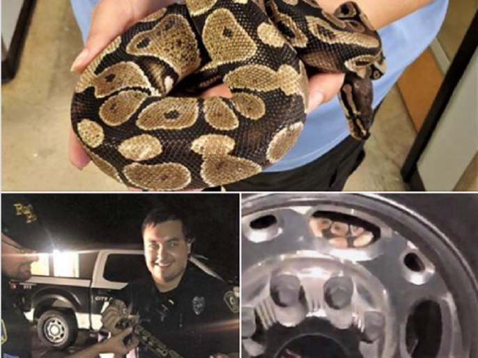woman found 3 foot long python from her car tire police rescue him photos goes viral | कारच्या टायरमध्ये लपला होता अजगर, पाहून महिलेची चांगलीच उडाली भांबेरी