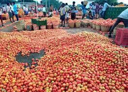 Tomato auction starts from today in Pandhurli sub-market of Sinnar market committee | सिन्नर बाजार समितीच्या पांढुर्ली उपबाजारात आजपासून टोमॅटो लिलाव सुरु