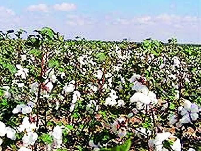 Lack of manpower for insurance companies for crop panchayats | पीक पंचनाम्यासाठी विमा कंपन्यांकडे मनुष्यबळाचा अभाव