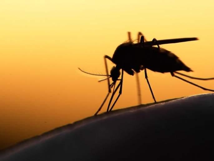 Dengue is also on the rise in Nagpur along with Corona | नागपुरात कोरोनासोबत डेंग्यूही वाढतोय