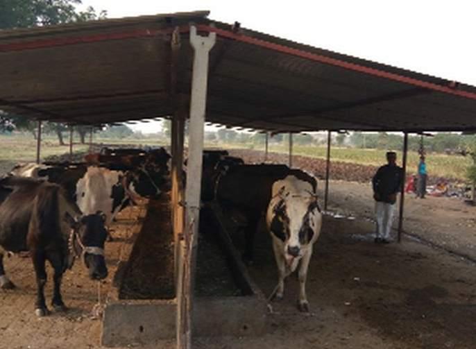 Milk prices are small and cattle feed prices | दुधाचे भाव अल्प तर पशुखाद्यांचे भाव गगनाला