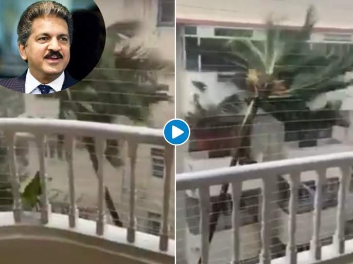 Video: Anand Mahindra tweeted Strong video of Mumbai storms with question   Video: मुंबईच्या वादळी वाऱ्यातील जबरदस्त व्हिडीओ; आनंद महिंद्रांनी ट्विट करत विचारला प्रश्न