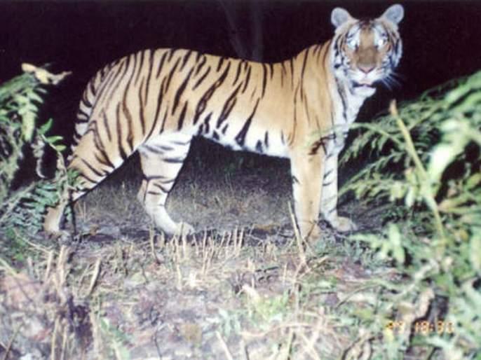 80 trap cameras in Dnyan Ganga Sanctuary | ज्ञानगंगा अभयारण्यात ८० ट्रॅप कॅमेरे