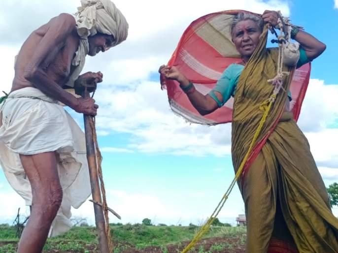 Sir, where is the retirement for the farmer, double sowing of farmer in solapur | Video: लेकरा, शेतकऱ्याला कुठं असतीय रिटारमेंट, पोटात कालवणारी 'दुबार पेरणी'