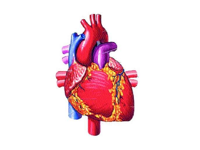 Pune's 30-year-old heartbeat heart! 84th cardiovascular surgery successful   पुण्याच्या ३० वर्षीय तरुणाचे हृदयदान! ८४वी हृदयप्रत्यारोपण शस्त्रक्रिया यशस्वी