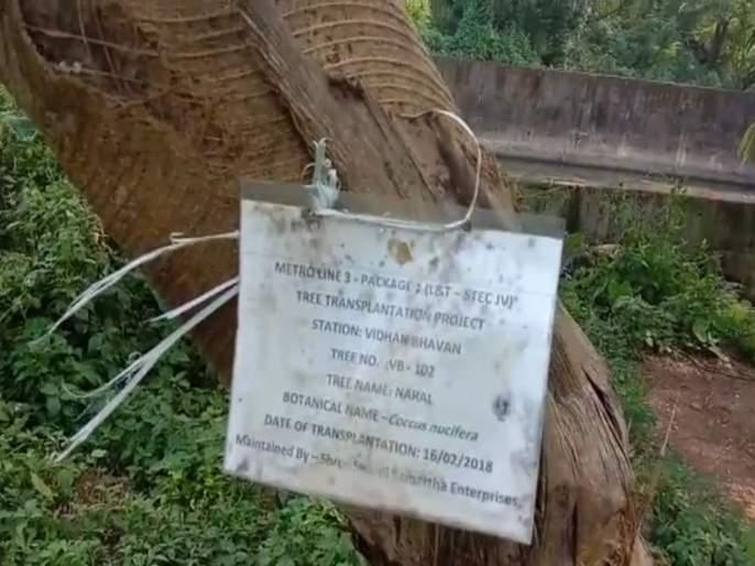 800 of 1800 trees transplanted by Mumbai Metro from aarey forest are dead | मेट्रोसाठी आरेतून स्थलांतरित केलेली 1800 पैकी 800 झाडं मृतावस्थेत