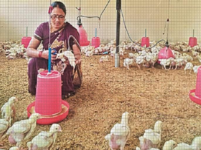 Millennial turnover of women farmers from poultry business | कुक्कुटपालन व्यवसायातून महिला शेतकऱ्याची लाखोची उलाढाल