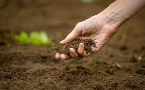 Agricultural land fertility decrease ; Buldhana production decreases | शेतजमीनीचा पोत बिघडला; बुलडाणा जिल्ह्यात एकरी उत्पादनात निम्म्याने घट!