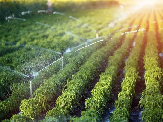 Prime Minister Kisan Samman Nidhi scheme in washim | प्रधानमंत्री किसान सन्मान निधी योजनेच्या अंमलबजावणीस गती!