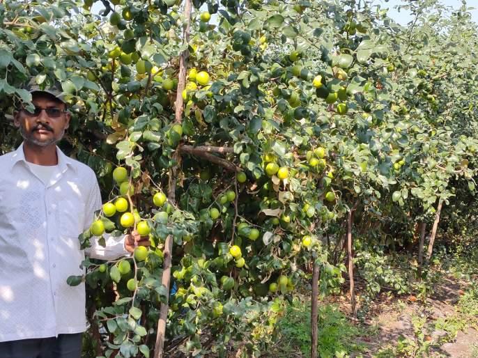 A farmer finds a way of prosperity by Apple Bery | ॲप्पल बोर शेतीतून शोधला उन्नतीचा मार्ग!