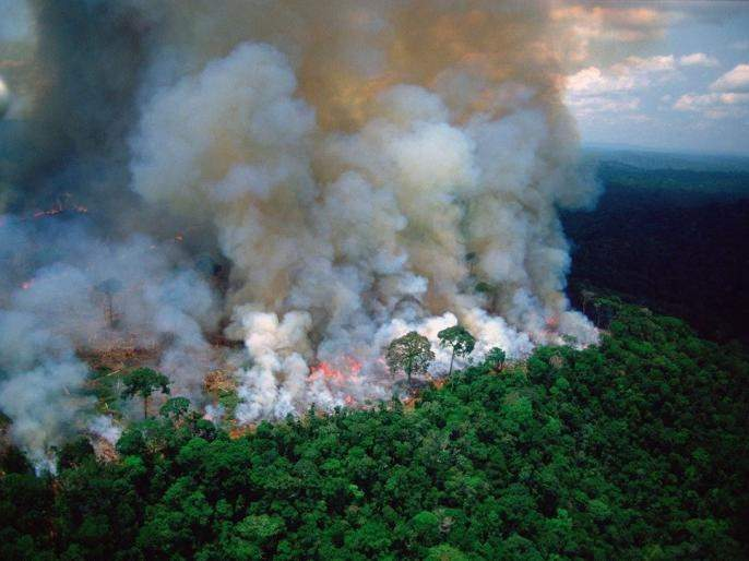 Amazon rainforest fire: Lungs of our planet burning with 99% fires started by humans | Amazon Rainforest Fire : जगातील सर्वात घनदाट जंगलाला भीषण आग