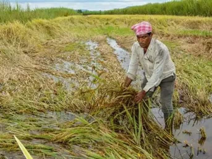 22.44 lakh hectares are affected, demand of Rs 1543.67 crore In Amravati | अमरावती विभागात २२.४४ लाख हेक्टर बाधित; १५४३.६७ कोटींची मागणी