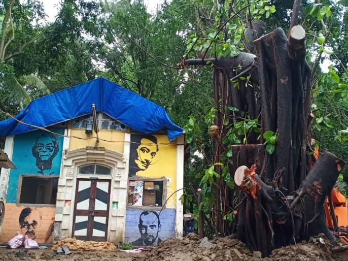 The fallen trees come alive again | कोसळलेली झाडे पुन्हा जिवंत