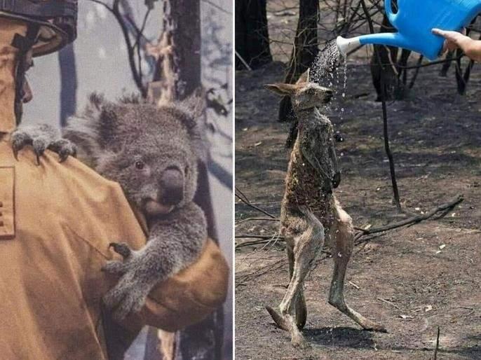 Australia Fire : Hockey India donates US$25,000 to Red Cross bushfire appeal | ऑस्ट्रेलिया आग : पुनर्वसनासाठी टीम इंडियाचा पुढाकार, केली लाखोंची मदत