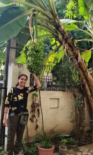 Garden decorated with blooming bananas | बहरलेल्या केळीने सजली परसबाग