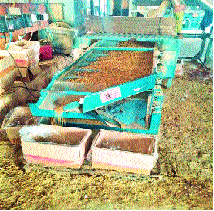 Due to inappropriate environments, reduction in currant production | अयोग्य वातावरणामुळे बेदाणा उत्पादनात घट