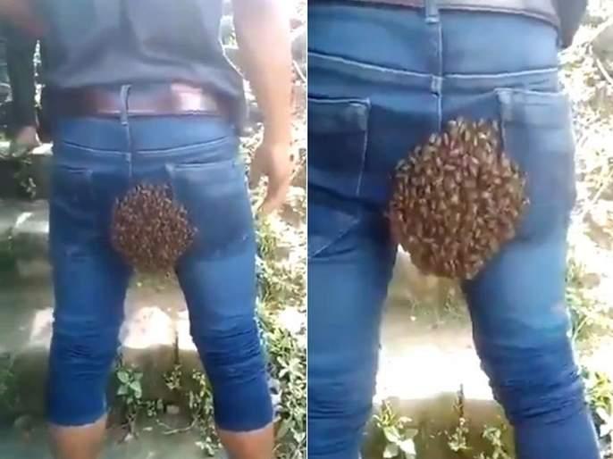 Video: beehive at a most unlikely place, video goes viral on social media   बाबो! मधमाश्यांनी तरूणाच्या पृष्ठभागावरच बनवलं घर, व्हिडीओ पाहून मारून घ्याल कपाळावर हात!