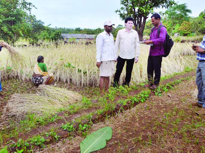 Ratnagiri district has a loss of Rs | रत्नागिरी जिल्ह्यात भातशेतीचे २६ कोटी ७५ लाखांचे नुकसान
