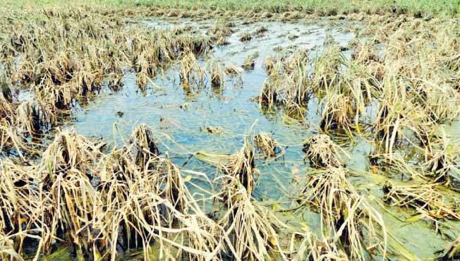 Untimely rains affect 101 hectare area of 187 farmers | अवकाळी पावसाने १८७ शेतकऱ्यांचे १०१ हेक्टर क्षेत्र बाधित