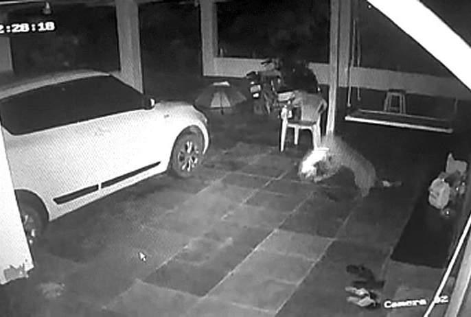 The leopard attacked and killed the dog | बिबट्याने हल्ला करून श्वान केला फस्त