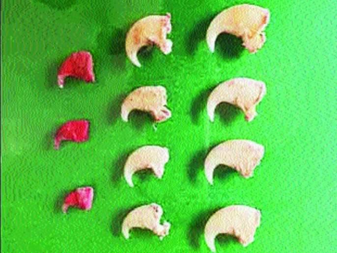The nail sellers hang in the leopard | बिबट्याची नखे विकणारे अटकेत