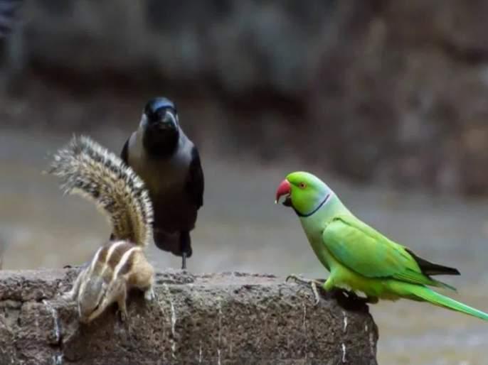 When will the state-of-the-art laboratory for bird and animal testing be set up in Pune? Proposal pending due to lack of funds   पुण्यात पक्षी,प्राणी तपासणी अत्याधुनिक प्रयोगशाळा कधी होणार? निधीअभावी प्रस्ताव प्रलंबित