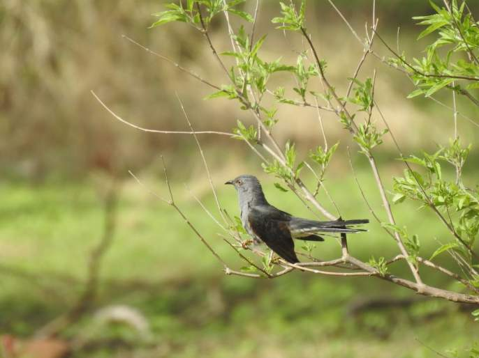 1st Maharashtra Bird Meeting Meeting | ३३वे महाराष्ट्र पक्षिमित्र संमेलन रेवदंड्याला