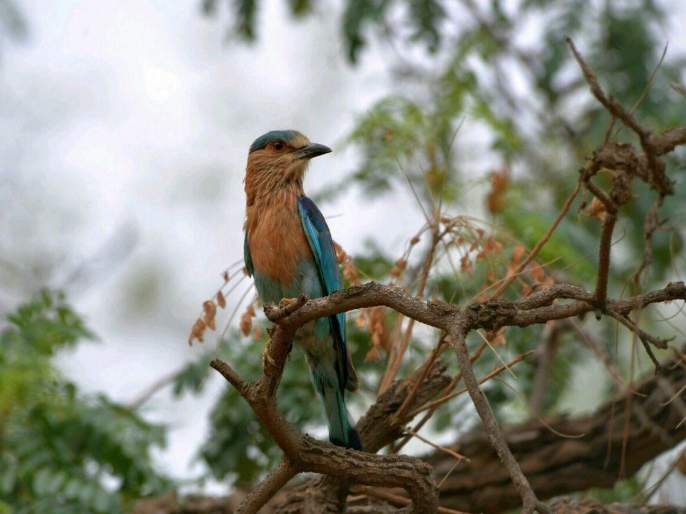 Changes in the habitat of birds in the arena | आरेमधील पक्ष्यांच्या अधिवासात होतोय बदल