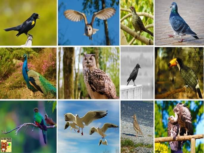 needs birds Diversity : Anil Mahajan   पक्षी वैविध्य जपण्याची गरज : अनिल महाजन