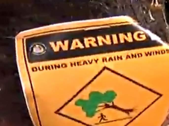 Do not stand below the tree in rainy season; Notice given by the BMC | मुंबईकर सावधान! झाडाखाली उभं राहू नका; पालिकेने दिला इशारा