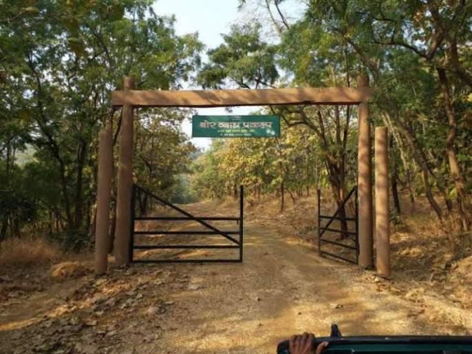 Forest tourism at Bor Tiger Project closed again   बोर व्याघ्र प्रकल्पातील वन पर्यटन पुन्हा बंद