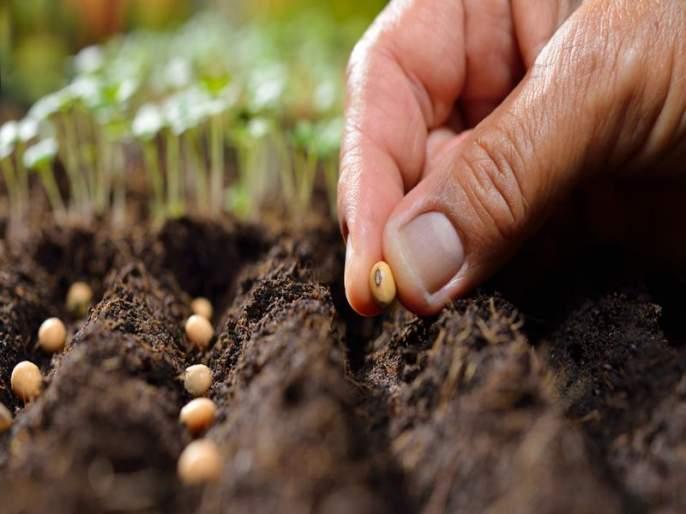 Environmental loss due to unauthorized seed, eight companies target SIT: illegal production, sale and distribution of several states   अनधिकृत बियाण्यांमुळे पर्यावरणाचा -हास, आठ कंपन्या एसआयटीचे लक्ष्य : अवैध उत्पादन, विक्री करणा-या अनेक राज्यांमध्ये टोळ्या