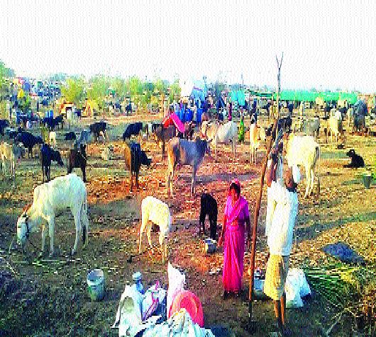 Anganwadis will now start in fodder camp In the company of the family, | चारा छावणीतही आता सुरू होणार अंगणवाड्या! कुटुंबीयांच्या संगतीतच गमभन